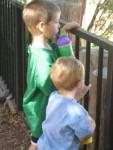 Boys at the Reid Park Zoo