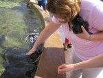 Heather petting stingray.jpg